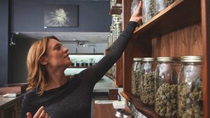 mendocino cannabis dispensary